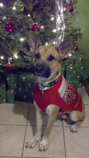 Huck looks quite dapper in his Christmas sweater.