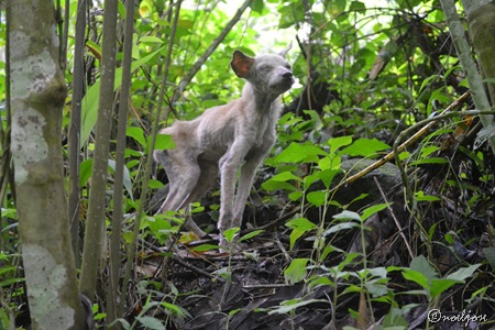 dog along the trails of Manabu Peak