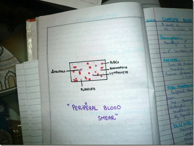 peripheral blood smeer diagram haematology