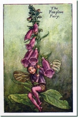 foxglove-flower-cicely-mary-barker