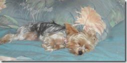 Maddie-worn-out.15.Nov.2011