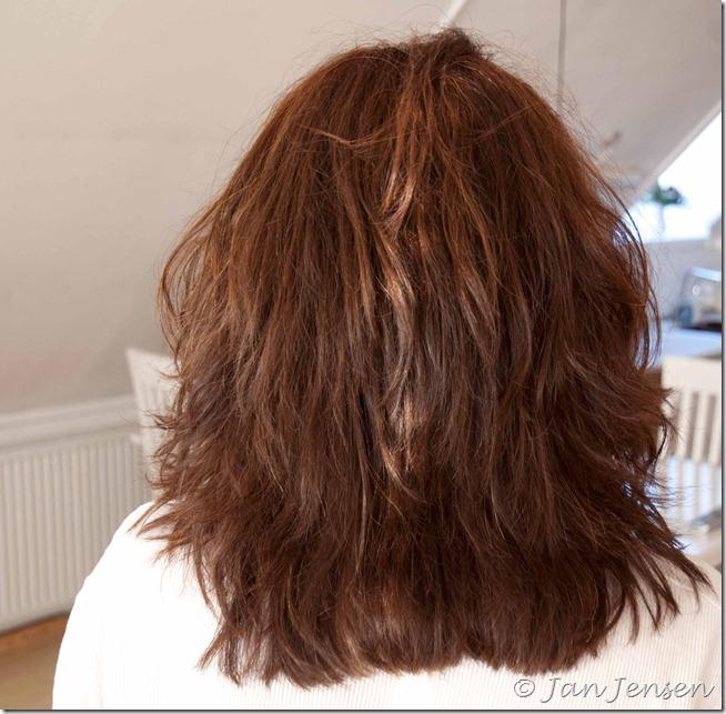 korthåret