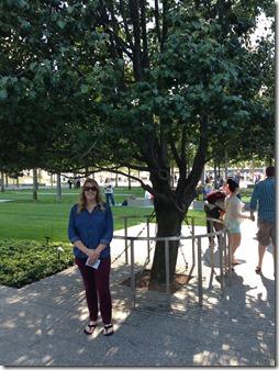 The survivor tree at the 9/11 Memorial