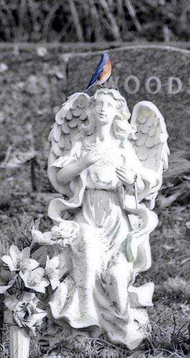 bluebird and angel