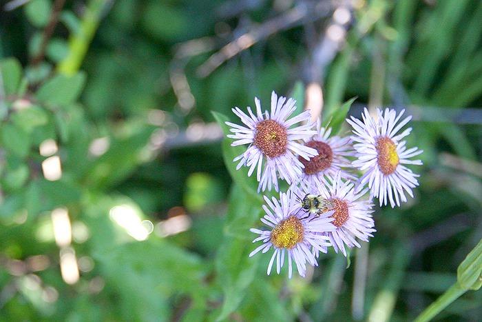 web2013 08 12_3823 bumblebee