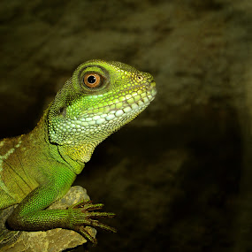 Green Lizard by Peggy LaFlesh - Animals Amphibians ( lizard, animal )