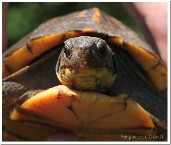 turtle2 copy