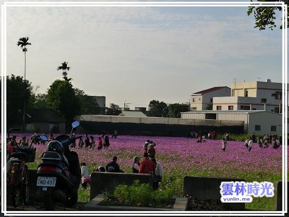 2012莿桐孩沙里的花海開了-花舞雲林、亮點莿桐
