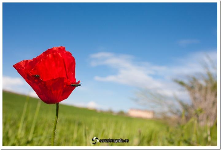 cantaburros - aranda-101