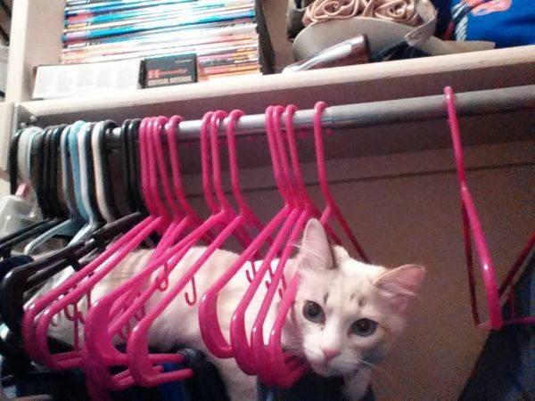 Os gatos não são muito bons em esconde-esconde 6