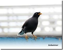 bird2a
