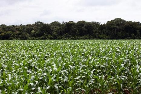 corn-field_1490857i
