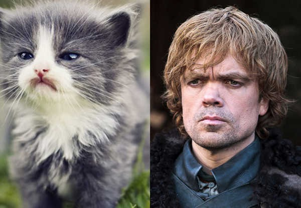 E se os personagens de Game of Thrones fossem gatos 7