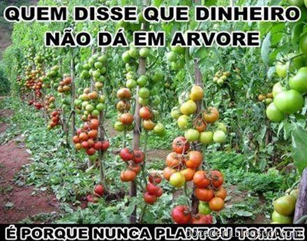 tomates26