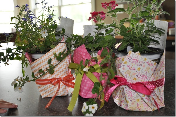 Wrapped Plants