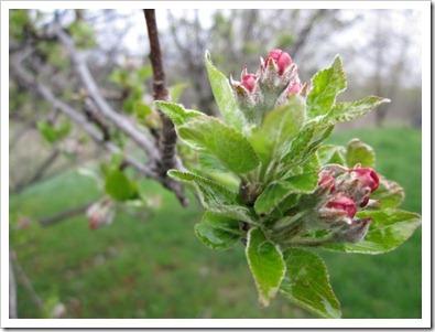 20120501_spring-leaves_006