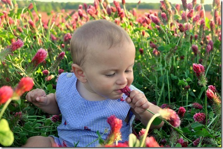 red clover pics 0423 (57)