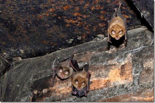 miembros de una agrupación reproductora