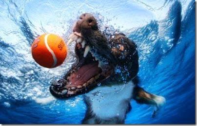 perros bajo el agua (5)