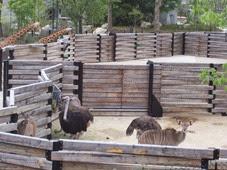 2014.04.21-071 autruches et koudous