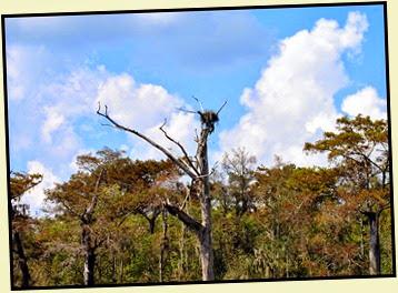 05i - Lonely Osprey Nest