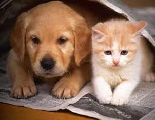 Presente Caes e Gatos