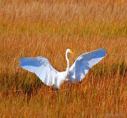 5. egret-kab