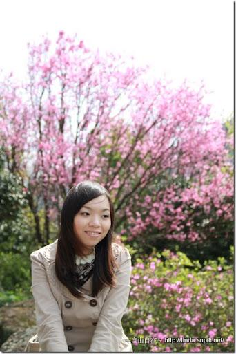 2010陽明山花季-觀景亭