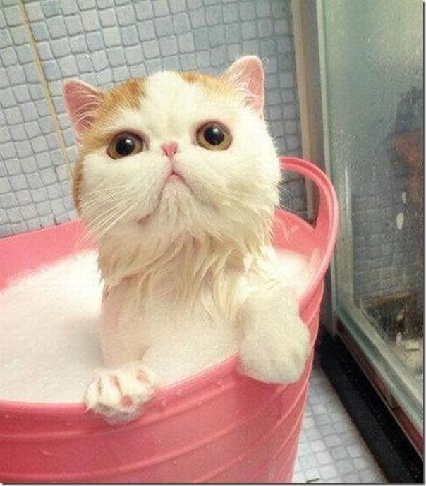 gato tomando banho (4)