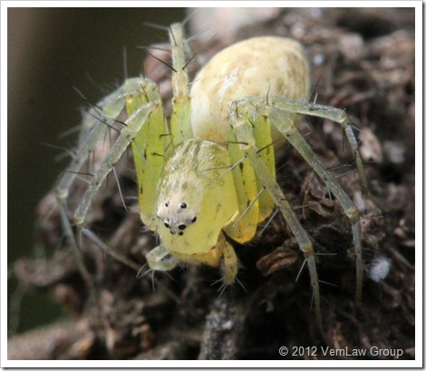 SpiderIMG_3262 (2)
