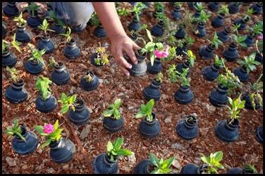 Dai lacrimogeni nascono fiori.. (6)