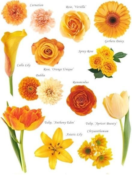 Know Your Flowers 2