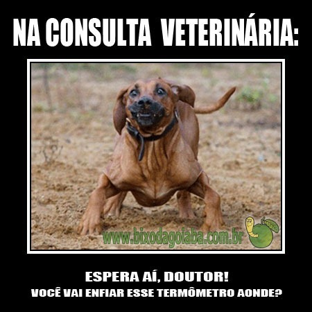 na-consulta-veterinaria