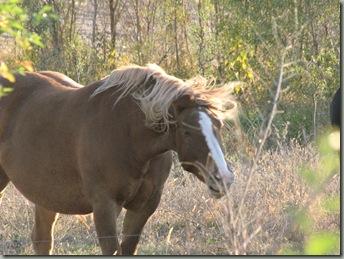 horses 069
