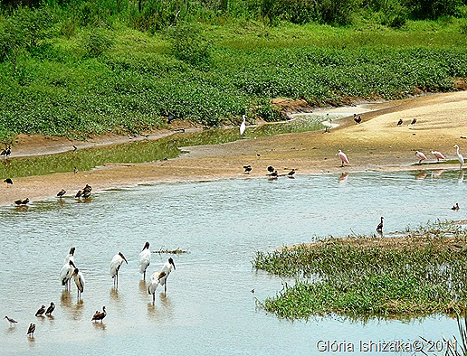 Glória Ishizaka - Guaiçara - margem do rio campestre - passaros 2