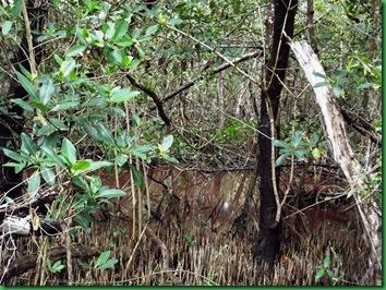 Mrazek Pond & Snake Bight Trail 033