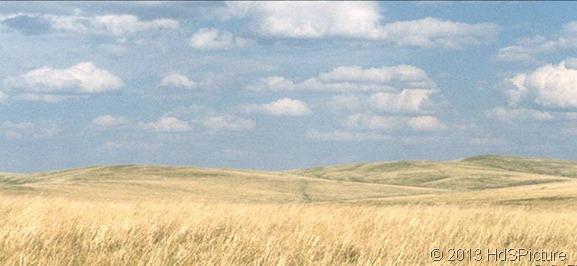 padang rumput - stepa