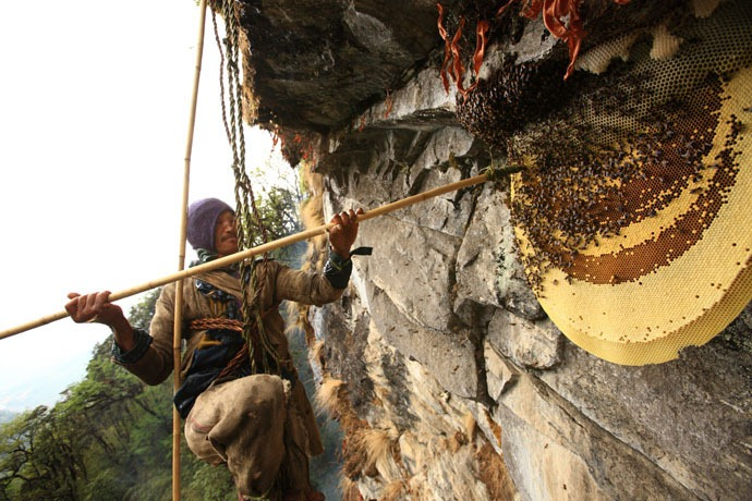 honey-hunters-nepal-26
