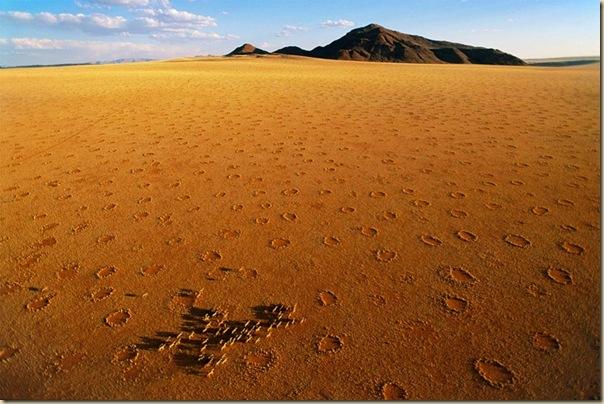 Mystérieux cercles de fées en Namibie (8)
