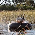 Xudum  Lodge, schwimmende Getränke © Foto: Ulrike Pârvu | Outback Africa Erlebnisreisen