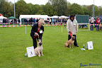 20100513-Bullmastiff-Clubmatch_30866.jpg