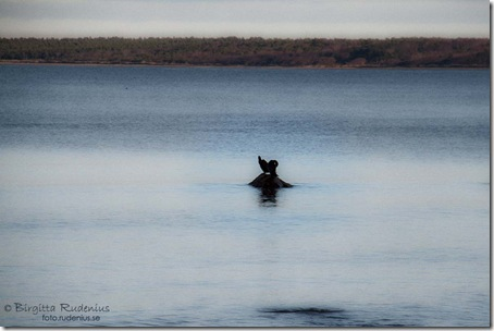 natur_20111208_hav