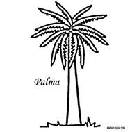 palma 3 1