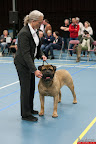 20130510-Bullmastiff-Worldcup-0825.jpg