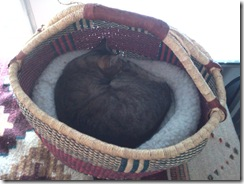 pigeon in a basket