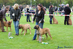 20100513-Bullmastiff-Clubmatch_30930.jpg