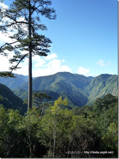 司馬庫斯-day2-山景2