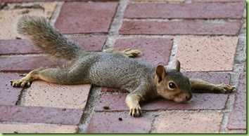 squirrel_flat2