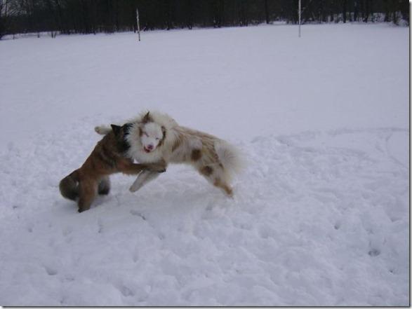 funny-animals-cute-44