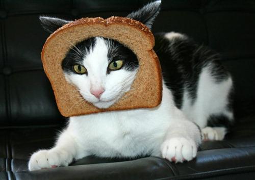 akai tom cat